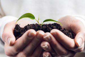 Earthworm Castings Fertilizer